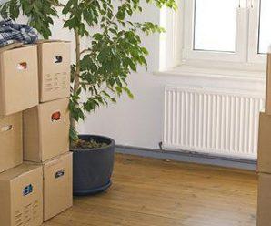 Le transport de vos plantes lors du déménagement