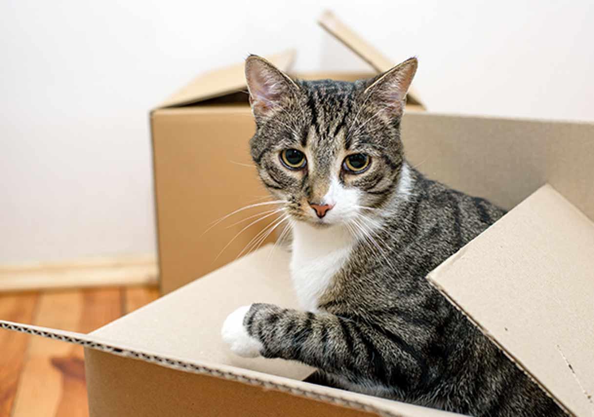 Déménagement avec un chat : conseils de 30 Millions d'Amis